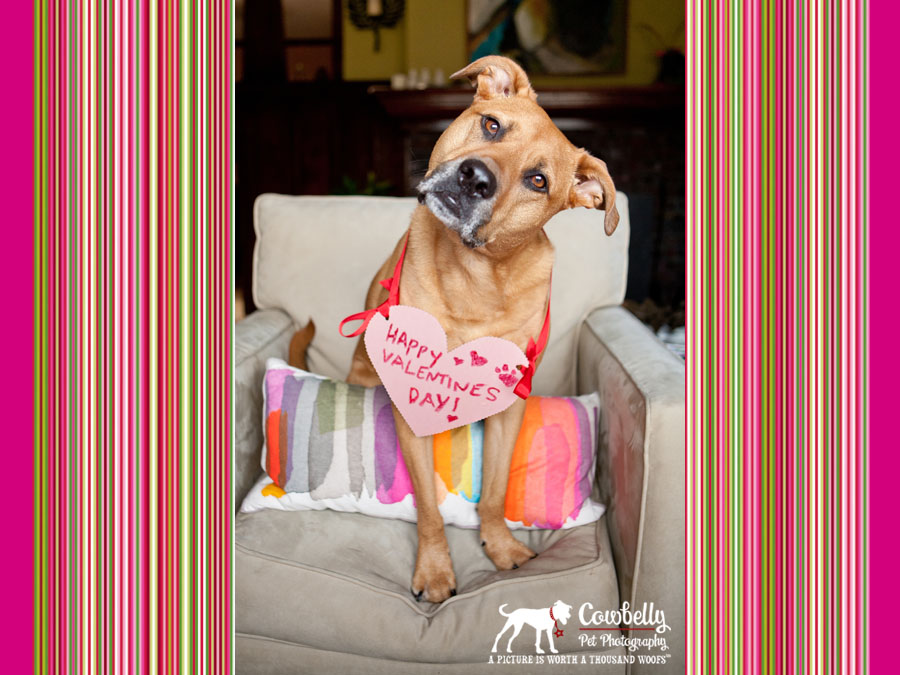 Fergie Valentine 2012 by Cowbelly Pet Photography