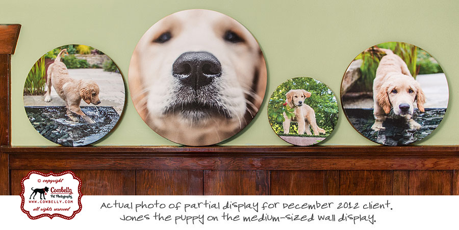 round gallery wrapped stretched canvas by cowbelly