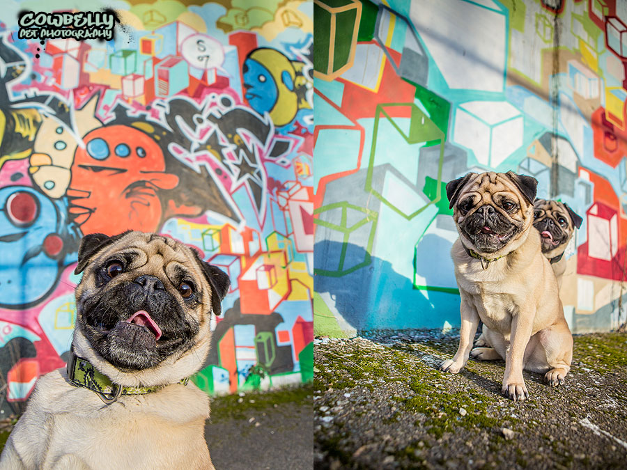 cowbelly's graffiti dogs project- seattle dog photography