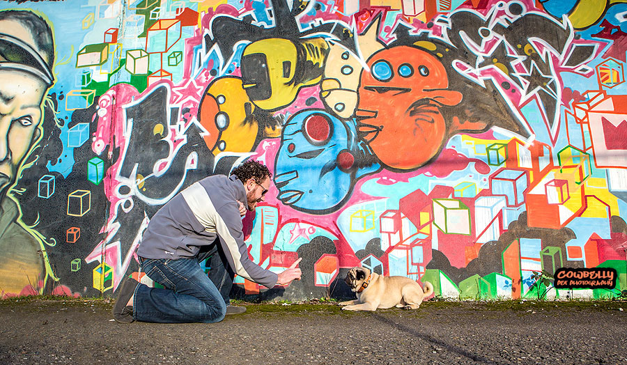 cowbelly's graffit and pugs photos- seattle dog photographer