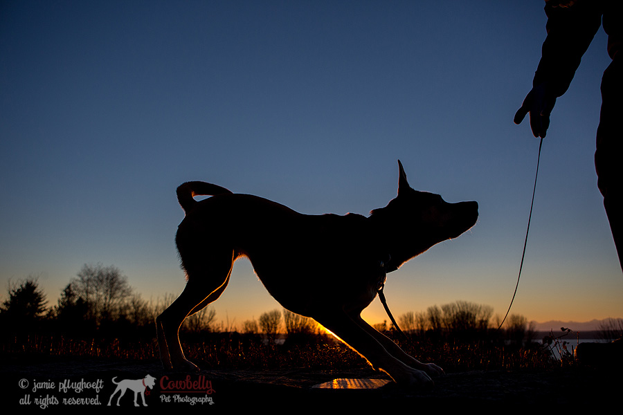 Penny-40-copyright-cowbelly-pet-photography